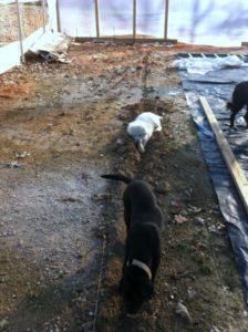 Dogwood Hills Guest Farm, Harriett, Arkansas | Farm Stay USA
