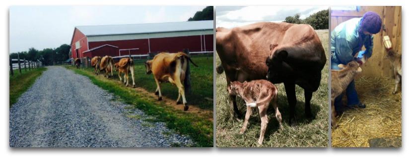 Flint Hill Farm Coopersburg PA | Farm Stay USA