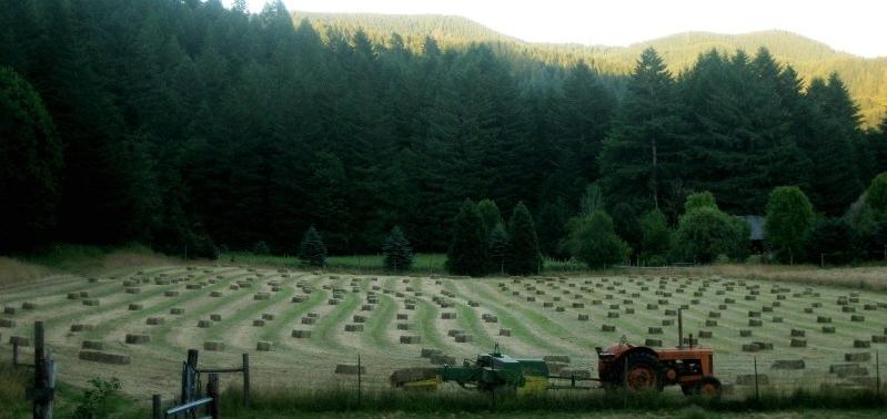 Leaping Lamb Farm, Alsea, Oregon   Farm Stay USA