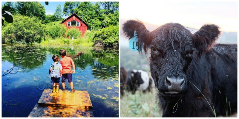 reek Farmstead, Walton, New York | Farm Stay USA
