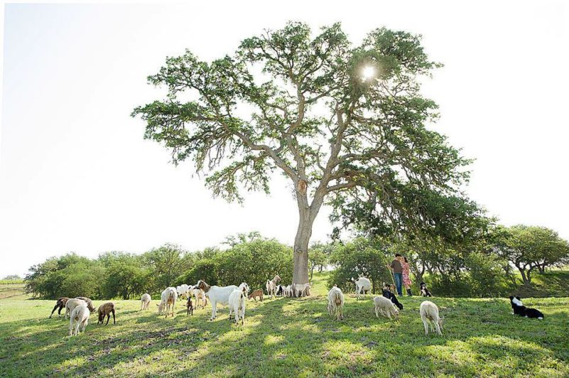 Reves de Moutons, Paso Robles, California | Farm Stay USA