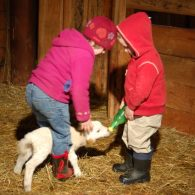 Leaping Lamb Farm little guests feeding a lamb