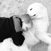 Great Pyrenees are so great with kids