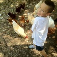 Chores with chickens