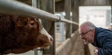 Get an up close look at a dairy farm - and maybe even milk a cow - at a farm stay.