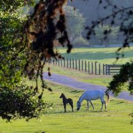 Blisswood Bed and Breakfast Ranch horse and foal
