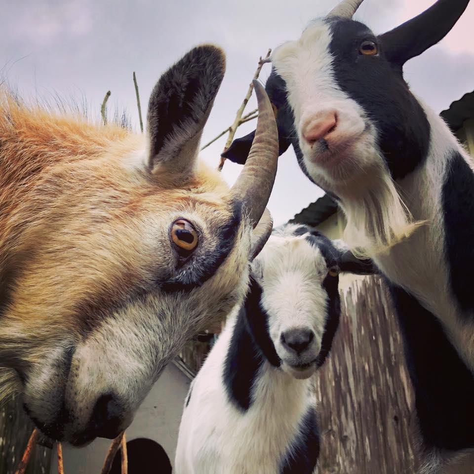 Bonne Terre Farm, Breaux Bridge, Louisiana | Farm Stay USA
