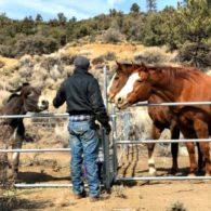 Hank and horses