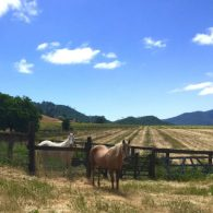 Welcome to Rustridge Ranch and Winery!