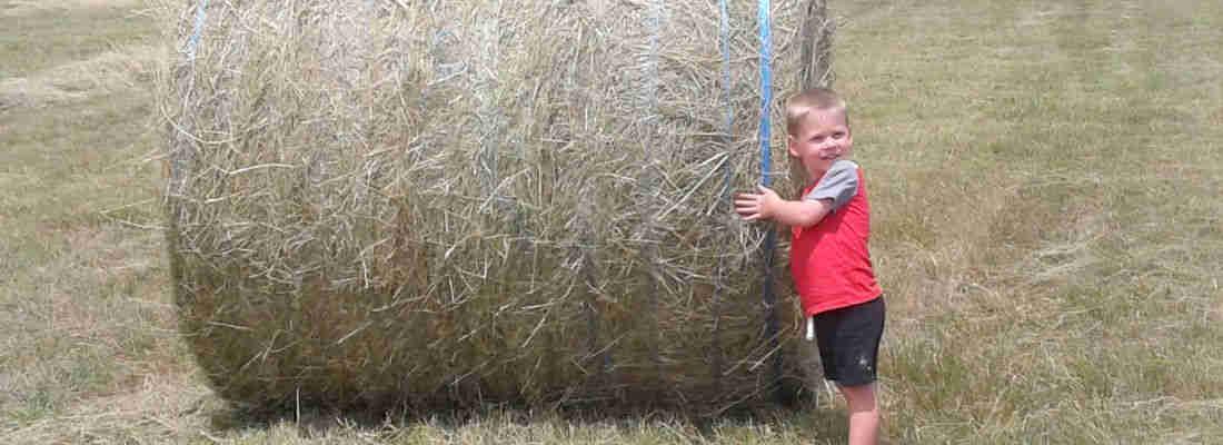 Scurlock Farms Georgetown TX | Farm Stay USA
