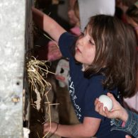 Collecting still warm, farm-fresh eggs from the hen house is a guest favorite activity at the Inn at Valley Farms.