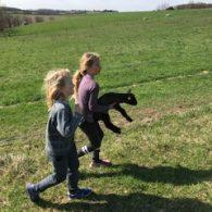 Lambs are always fun!