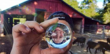 Stillwaters Farm, Henderson, Tennessee | Farm Stay USA
