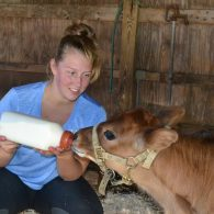 Bottle feeding the calf at East Hill Farm.