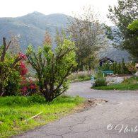 Morning Song Farm, CA | Photo by Ester Perez