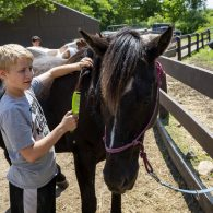 Horse grooming at Farm School