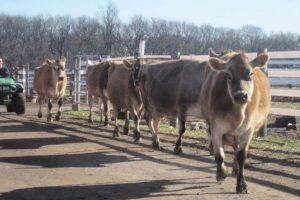Flint Hill Farm Coopersburg PA   Farm Stay USA