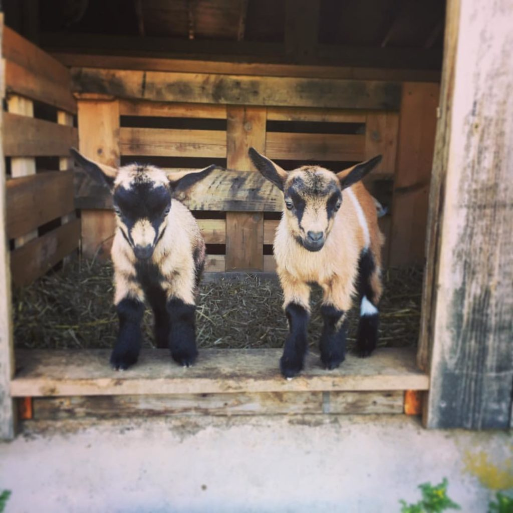 Toddy Pond Farm, Monroe, Maine | Farm Stay USA