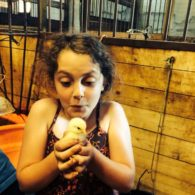 First time holding a baby chick