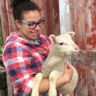 Hold a lamb
