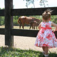 Welcome to Splendor Farms!