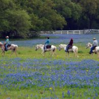 Take a ride through the glorious fields at Blisswood Bed and Breakfast Ranch