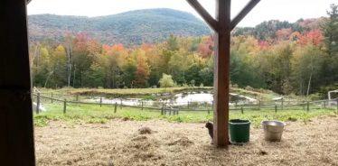 Cold Moon Farm, Jamaica, VT | Farm Stay USA