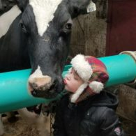 Kisses for cows