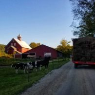 Heading to the barn