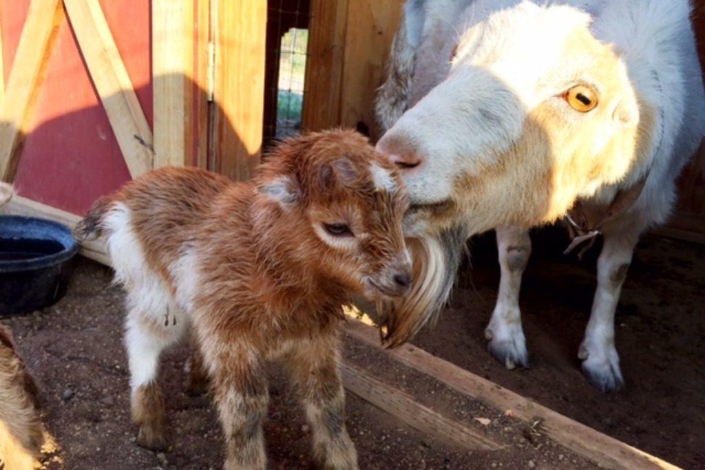 Three Sparrows Farm, Prescott, AZ | Farm Stay USA