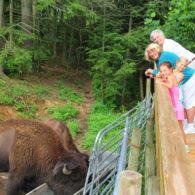 Bison viewing platform