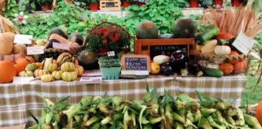 Blind Buck Valley Farmstead, Salem, New York | Farm Stay USA