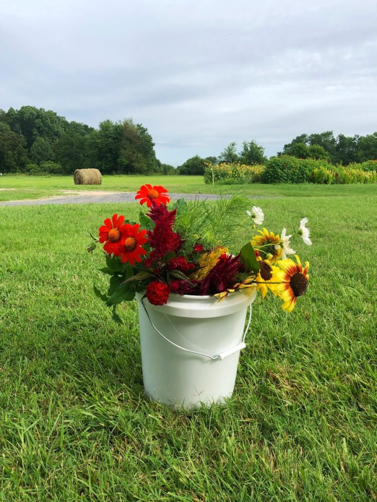 By Faith Farm, Joelton, Tennessee | Farm Stay USA