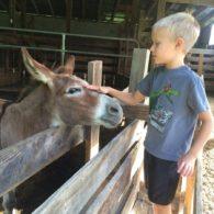 Pet a donkey!