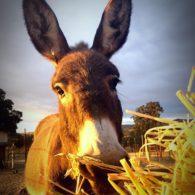 Have you met Donkey Oatie?