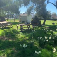 Picnic with the daffodils