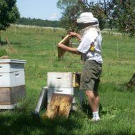 Beekeeping means fresh raw honey