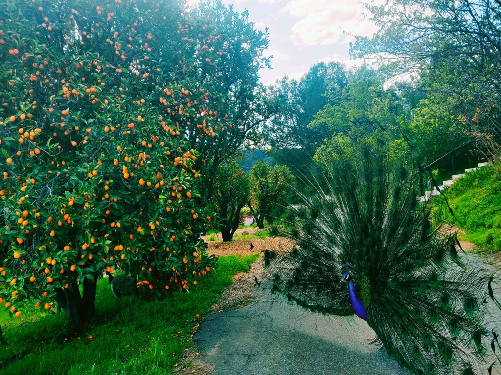 Morning Song Farm, Fallbrook, California | Farm Stay USA
